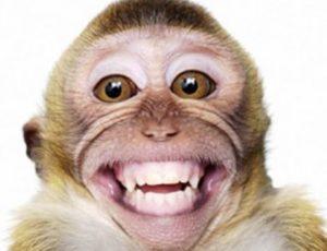 Zambia: O maimuță a lăsat orașul Livingstone fără curent electric după ce a manipulat un transformator