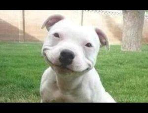 Germania: Peste 31.000 de câini participă la expoziția canină de la Leipzig
